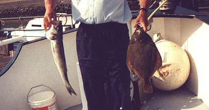 Zeebaars en Tong ,klik dubbel op foto om hem groter te zien